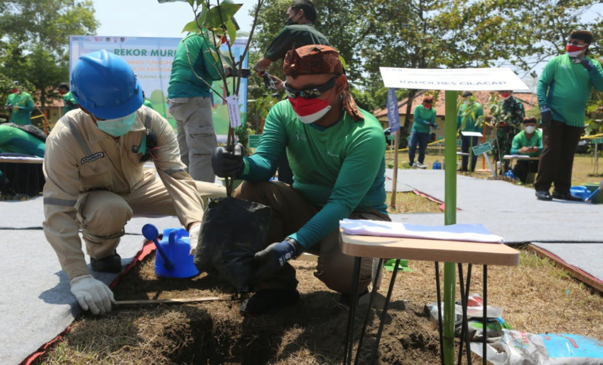 penanaman Atsiri terbanyak di Cilacap ini membuat pertamina mendapatkan rekor muri