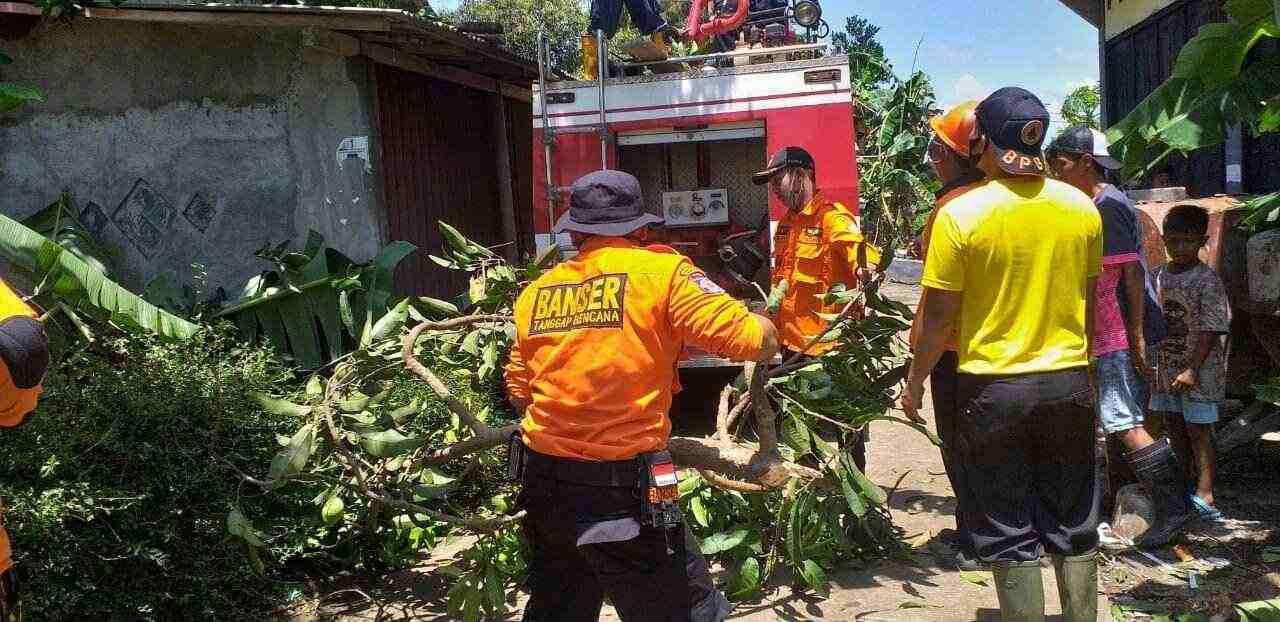 tim gabungan evakuasi pohon tumbang di kesugihan